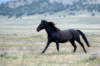 Utah Wild Horses and Mustang Photography